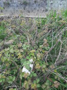 Mayenne - Déchets sur la langue de terre
