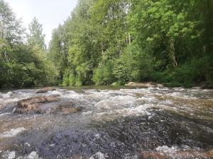 Rapide le long de la Mayenne